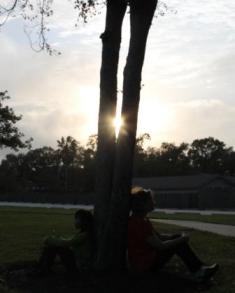 sun, september 11, pondering, trees